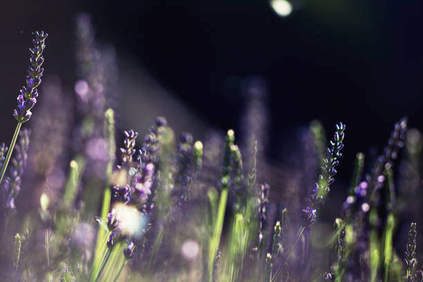 Floressense - bougie bijou luxe -